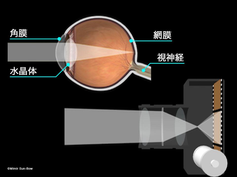 [IMG]網膜とフィルム