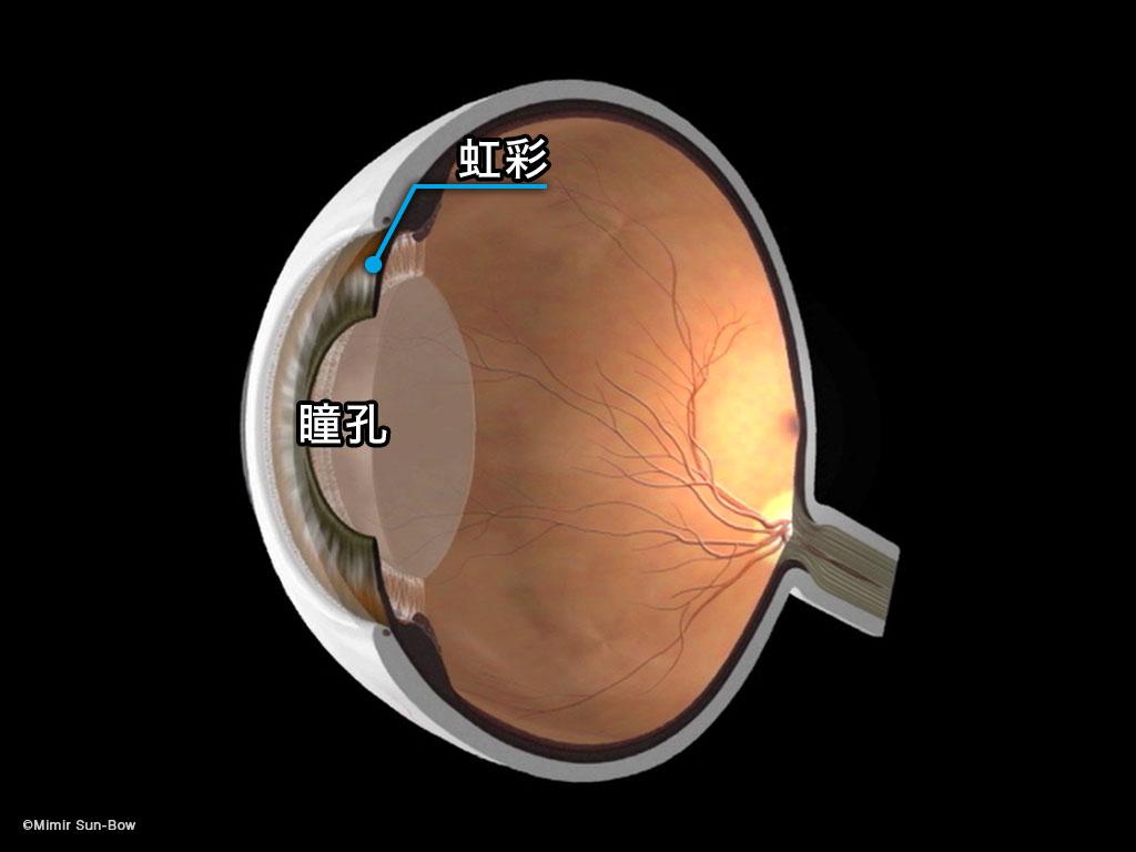[IMG]散瞳-7